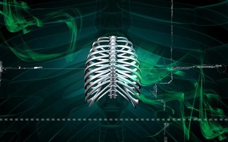 Digital illustration of  rib cage  in colour  background Stock Illustration - 8264313