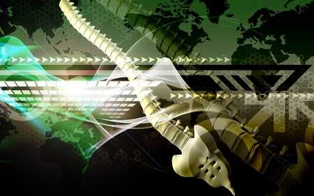 Digital illustration  of back bone in    colour background Stock Illustration - 8264311