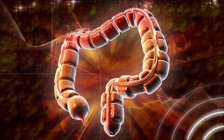 Digital illustration of large intestine in colour background Stock Illustration - 8320809