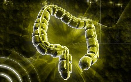 Digital illustration of large intestine in colour background  Stock Illustration - 8320805