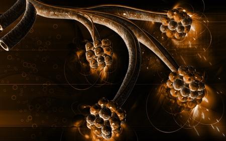 alveoli: gital illustration of  alveoli  in  colour  background Stock Photo