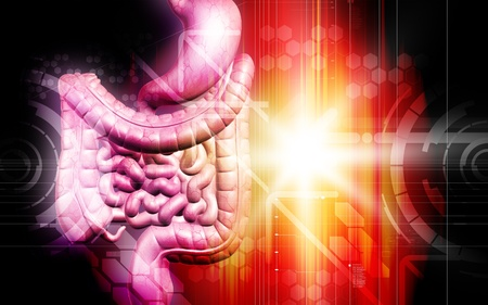 Digital illustration of human digestive system in colour background  illustration