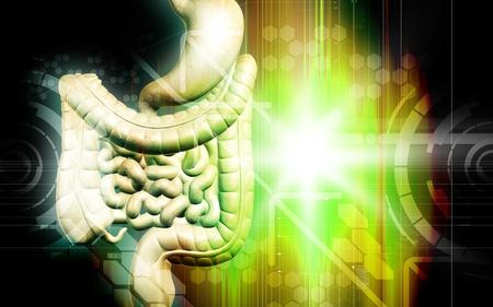 Digital illustration of human digestive system in colour background Stock Illustration - 8364821