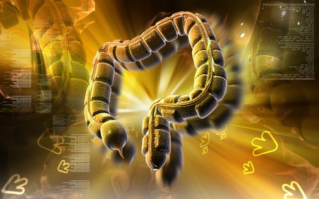 Digital illustration of large intestine in colour background  Stock Illustration - 8601982