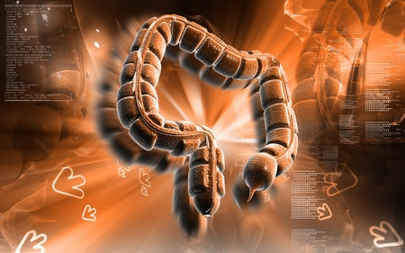Digital illustration of large intestine in colour background  Stock Illustration - 8601983