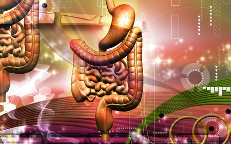 organ: Digital illustration of human digestive system in colour background