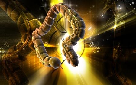 Digital illustration of large intestine in colour background Stock Illustration - 8742634