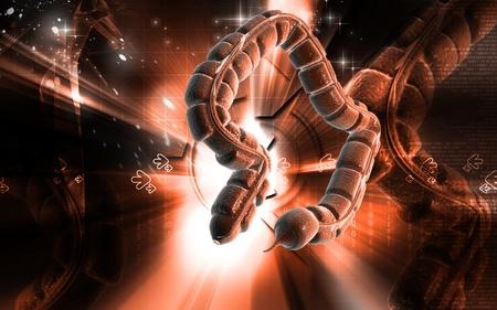 Digital illustration of large intestine in colour background  Stock Illustration - 8747703