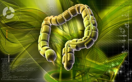 Digital illustration of large intestine in colour background Stock Illustration - 8742792