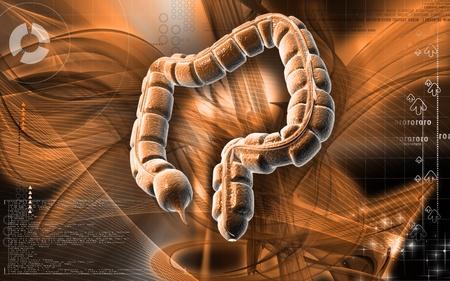 Digital illustration of large intestine in colour background Stock Illustration - 8742793