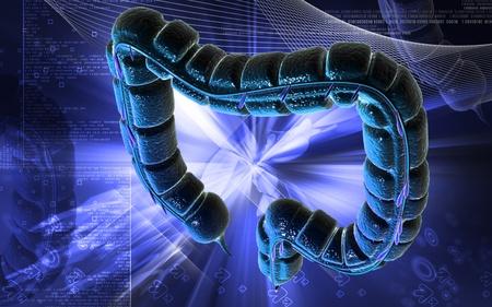 Digital illustration of large intestine in colour background Stock Illustration - 8748225