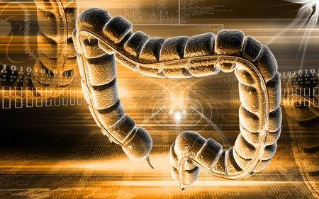 Digital illustration of large intestine in colour background Stock Illustration - 8856163