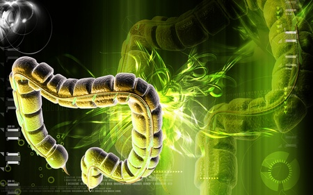 Digital illustration of large intestine in colour background Stock Illustration - 8855906