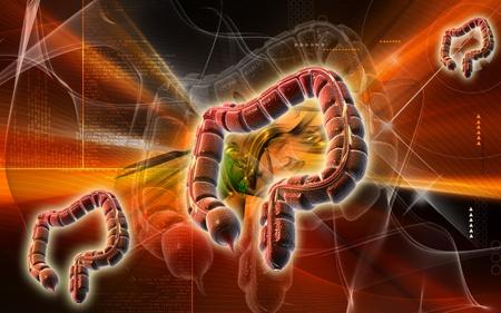 Digital illustration of large intestine in colour background Stock Illustration - 8933468