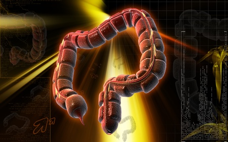 Digital illustration of large intestine in colour background Stock Illustration - 8933517