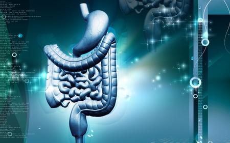 sistema digestivo: Ilustraci�n digital del sistema digestivo humano en fondo de color