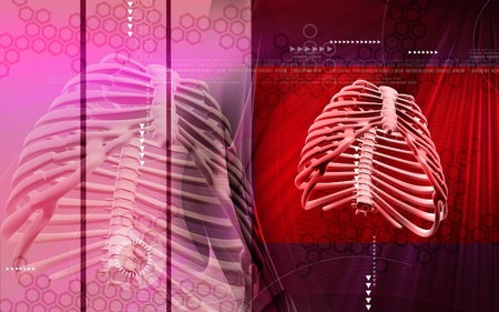 Digital illustration of  rib cage  in colour  background Stock Illustration - 9020574