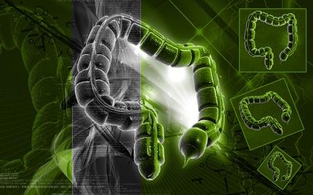 Digital illustration of large intestine in colour background Stock Illustration - 9089086