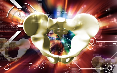 Digital illustration  of pelvic girdle in    colour background Stock Illustration - 9089080