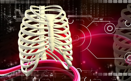 Digital illustration of  rib cage  in colour  background Stock Illustration - 9089068