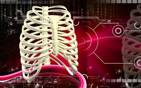 Digital illustration of  rib cage  in colour  background Stock Illustration - 9089068