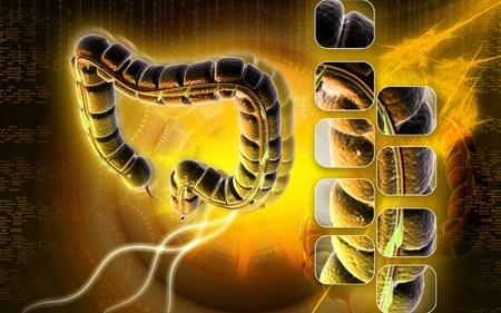 Digital illustration of large intestine in colour background Stock Illustration - 9089252