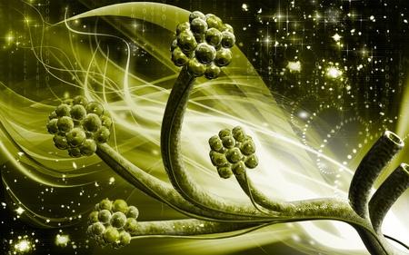 alveolos: Ilustraci�n digital de alv�olos en fondo de color