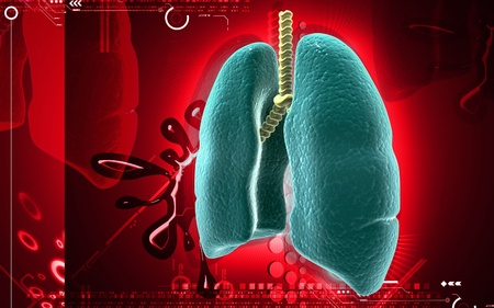 Digital illustration of human lungs in colour background Stock Illustration - 9149892