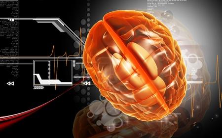 thalamus: Ilustraci�n digital del cerebro en el fondo de color   Foto de archivo