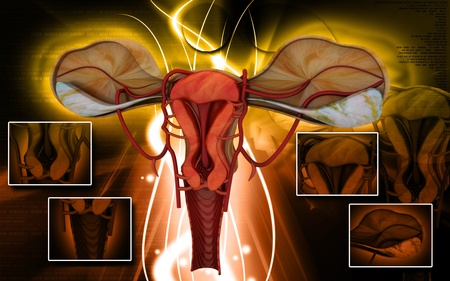 Digital illustration of  Uterus  in  colour  background Stock Illustration - 9149011
