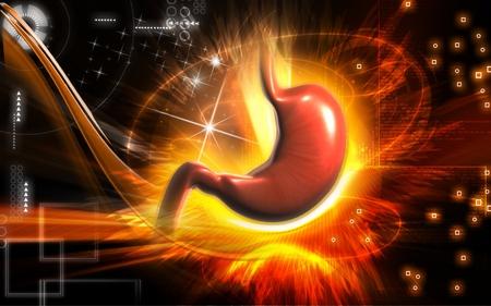 Digital illustration of  stomach  in colour  background   illustration