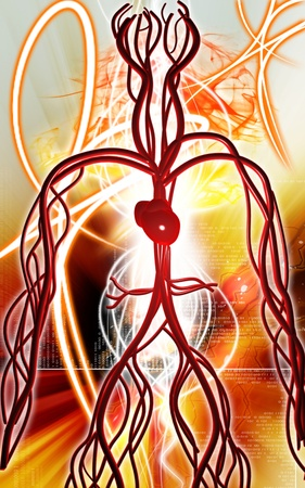 Digital illustration of vascular system in colour background   illustration