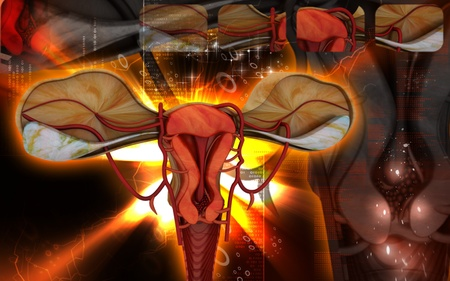 funding of science: Digital illustration of  Uterus  in  colour  background