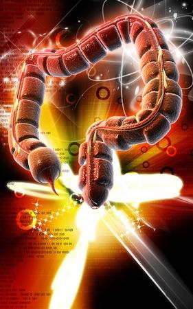 Digital illustration of large intestine in colour background Stock Illustration - 9308357