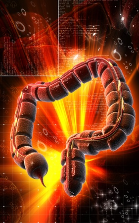 Digital illustration of large intestine in colour background  Stock Illustration - 9359304