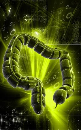 Digital illustration of large intestine in colour background Stock Illustration - 9359309