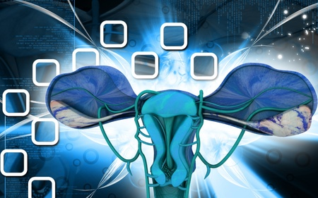 Digital illustration of  Uterus  in  colour  background Stock Illustration - 9390528
