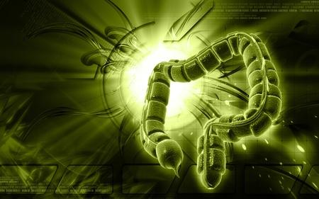 Digital illustration of large intestine in colour background  Stock Illustration - 9414621