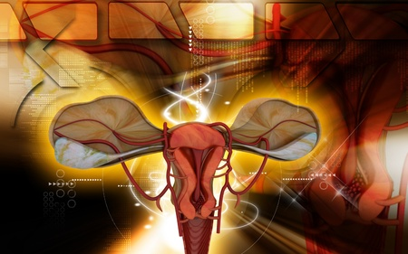Digital illustration of  Uterus  in  colour  background Stock Illustration - 9444457