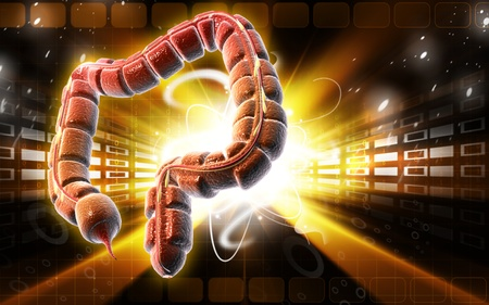 Digital illustration of large intestine in colour background Stock Illustration - 9505343