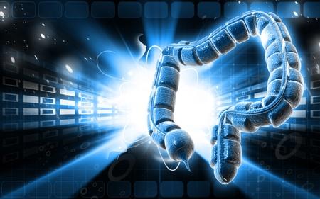 Digital illustration of large intestine in colour background Stock Illustration - 9505342