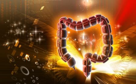 Digital illustration of large intestine in colour background Stock Illustration - 9536898