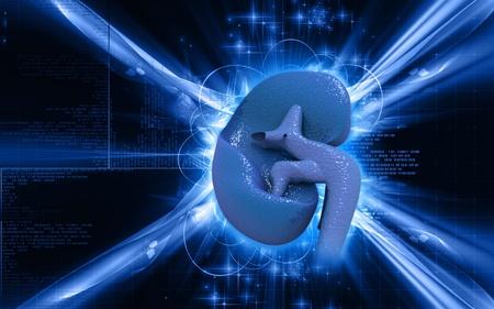 Digital illustration of kidney in colour background   illustration
