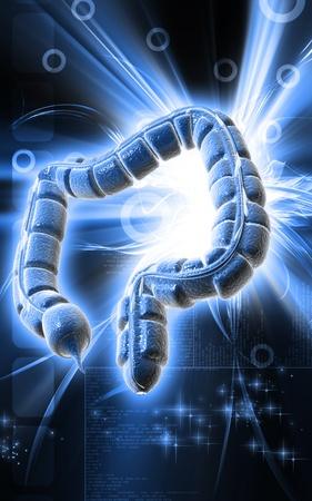 Digital illustration of large intestine in colour background Stock Illustration - 9582182