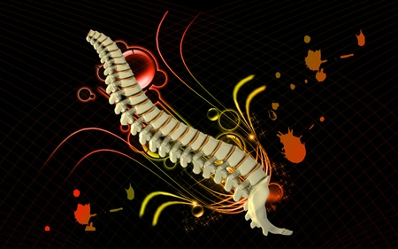 Digital  illustration  of back bone in    colour background   Stock Illustration - 9710922
