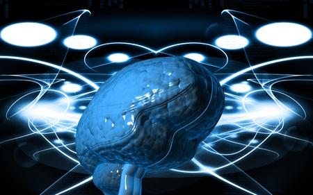 medulla oblongata: Digital illustration of  brain in colour  background   Stock Photo