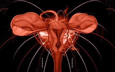 sistema reproductor femenino: Ilustraci�n digital de �tero en fondo de color  Foto de archivo