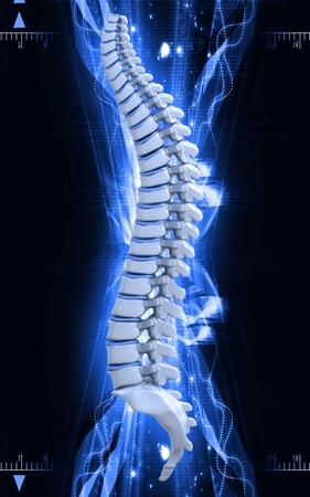 Digital  illustration  of back bone in    colour background   Stock Illustration - 9752390