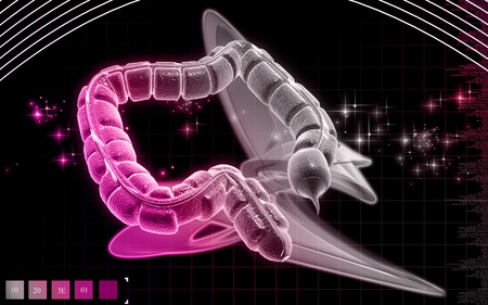 Digital illustration of large intestine in colour background Digital illustration of large intestine in colour background  Stock Illustration - 9752519
