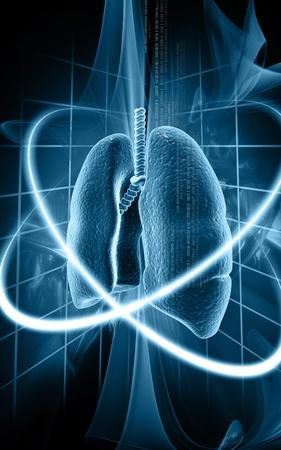 aparato respiratorio: Ilustraci�n digital de pulmones humanos en fondo de color
